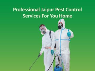 Professional Jaipur Pest Control Services For You Home.pptx