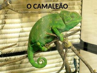 O CAMALEÃO.ppt